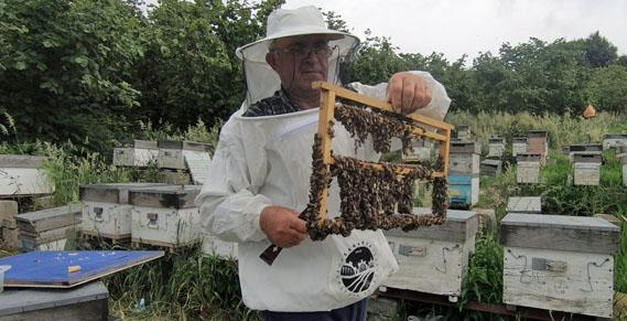 Oğul arı üretimine başladı