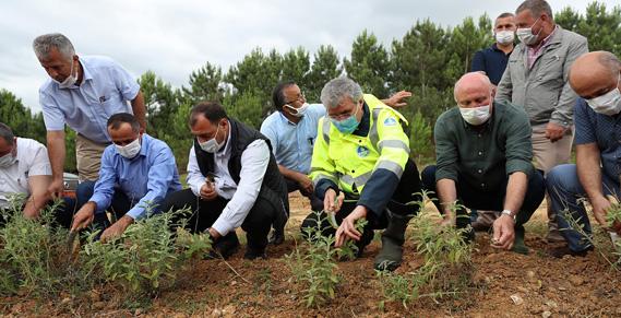 Melen Botanik Vadisi'nde ilk hasat yapıldı