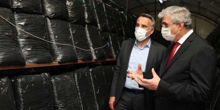 Sakarya Büyükşehir istiridye mantarı üretimine başladı